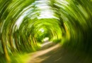Mofa-Fahrer fährt unter Drogeneinfluss in Bockenem