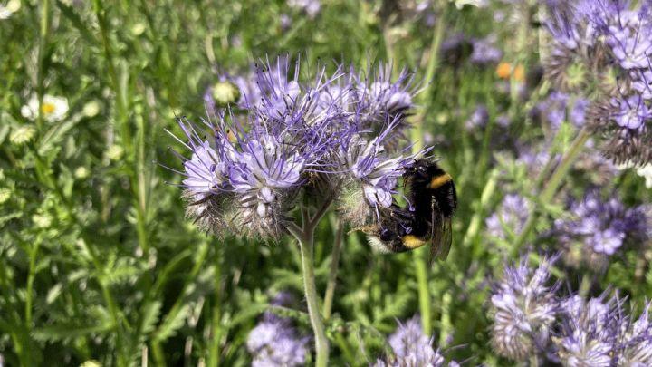 Das Projekt FINKA fördert Insekten im Ackerbau