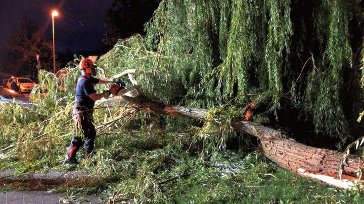 Sturmtief Kirsten beschädigt Trauerweide in Drispenstedt