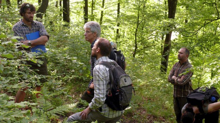 Forschungsprojekt: Naturwälder im Klimawandel