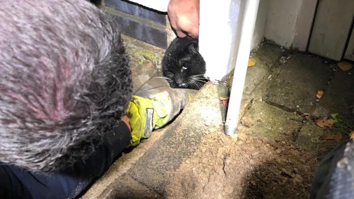Rettung einer Katze aus Zwangslage