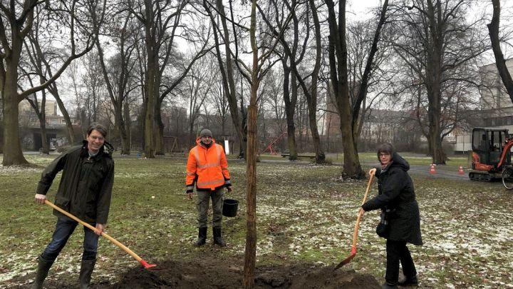 Stadt pflanzt umfangreich Bäume nach