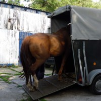 Hurra die Pferde sind da!