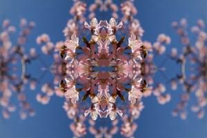 1024 Blossom Burst 7
