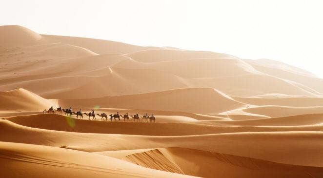 Camels making their way through the Sahara