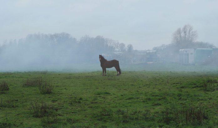 Healthy Horse, Healthy Planet