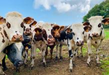 What does Brexit mean for farming and the environment?