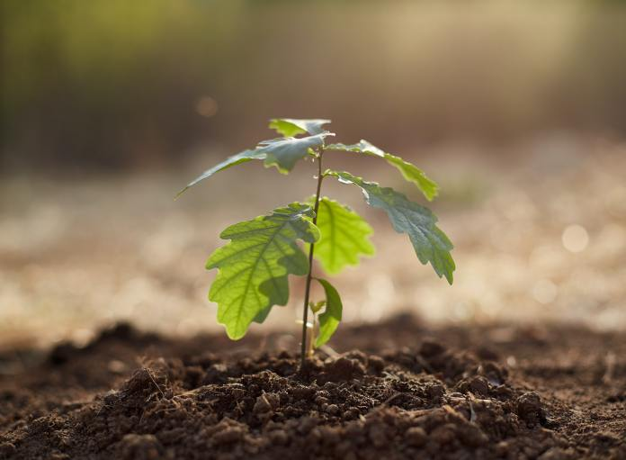 730,000 Trees planted by HS2 by Spring 2021