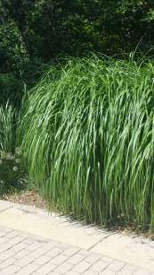 Big Grass!