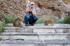Videotaping monkeys at Galta Monkey Temple