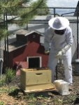 Installing the bee package (plastic white box at my feet)