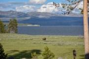 Bison at Lake Yellowstone