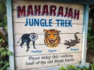 Jungle Trek