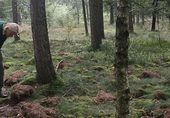 Spitzen en Bakker in bos