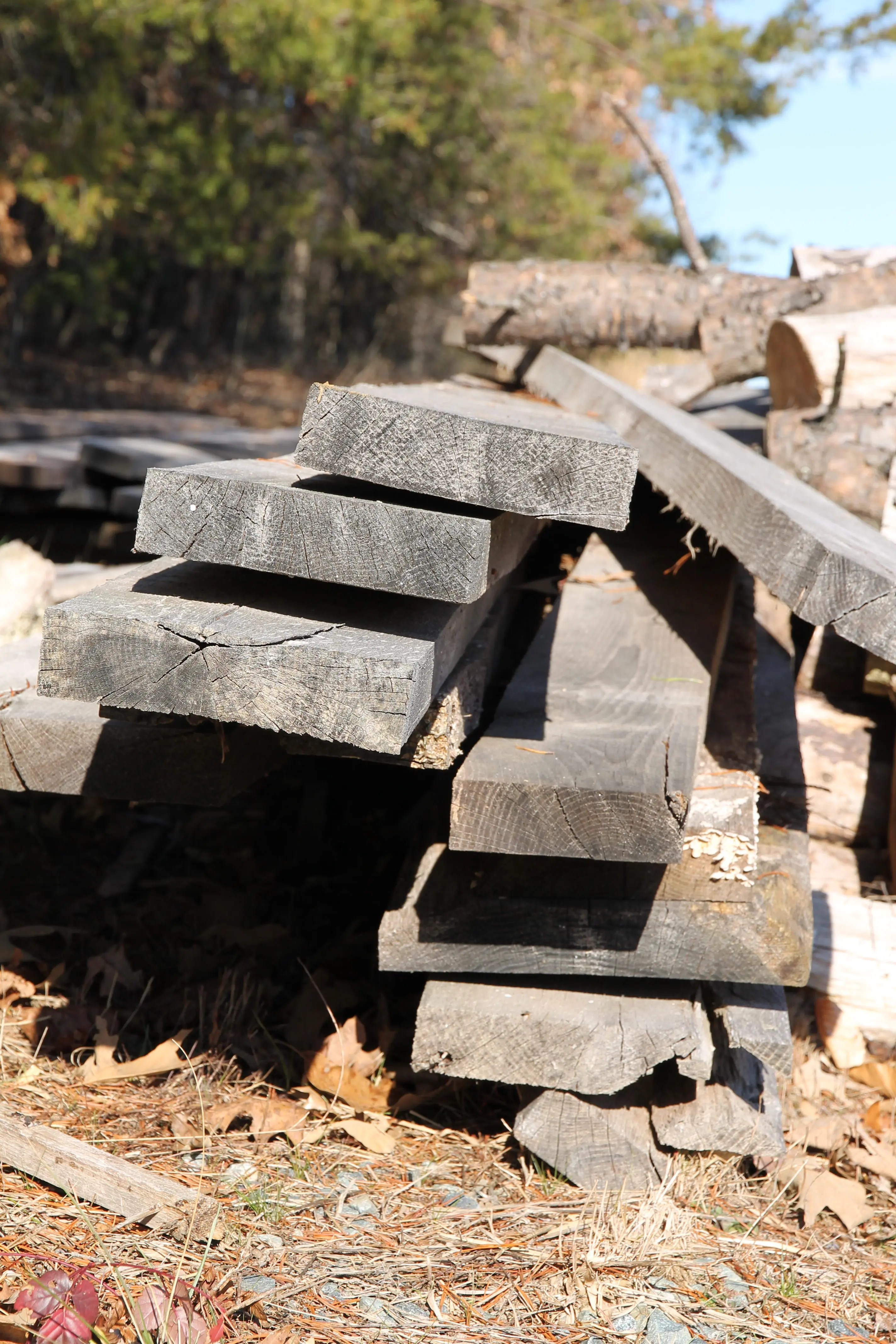 Different types of wood and how to use them hillsborough