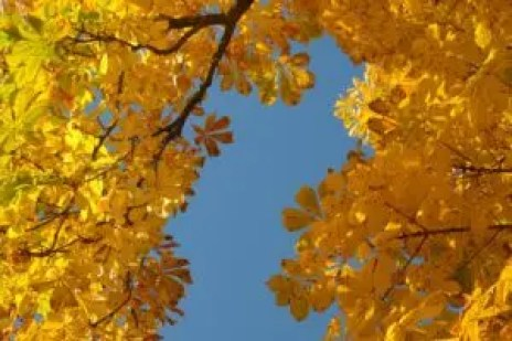 chestnut trees leaves wood how to use homesteading