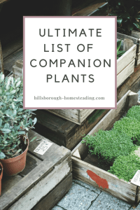 Intimidated by Companion Planting? This long list of companion plants explains exactly what they are and how to use them to get the most out of your garden this year!