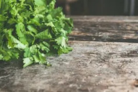 how to use cilantro companion planting vegetable plans