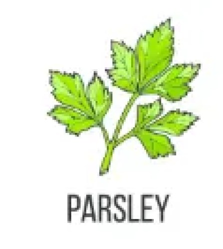 Parsley To Treat Allergies
