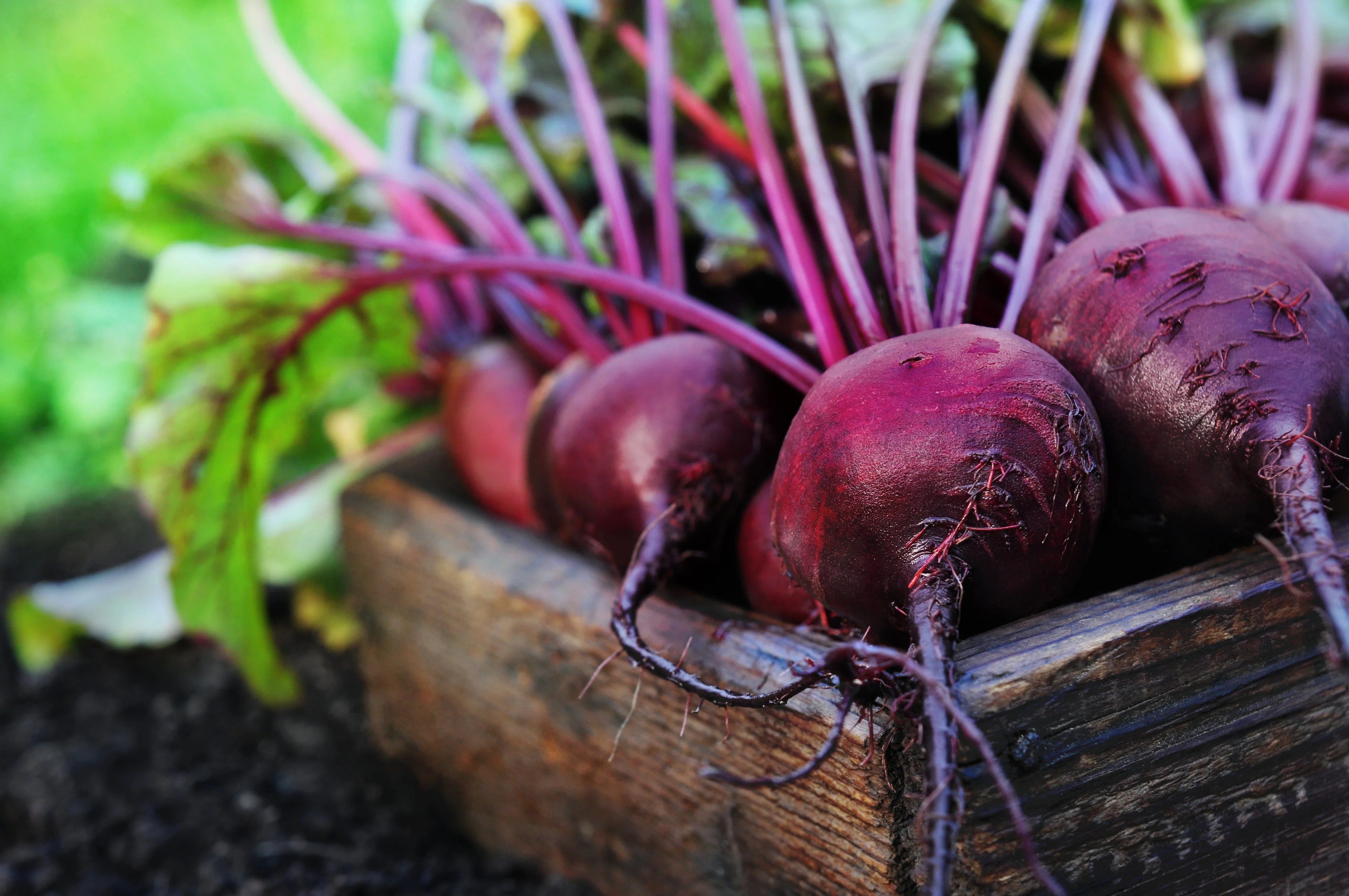 30 Second Guide to Growing Beets