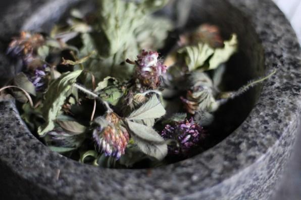 herbal remedy cradle cap