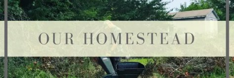 our life on the homestead