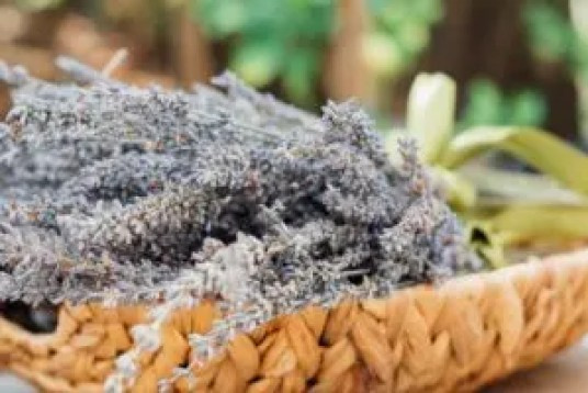how to use lavender essential oils or dried lavender flowers around the home