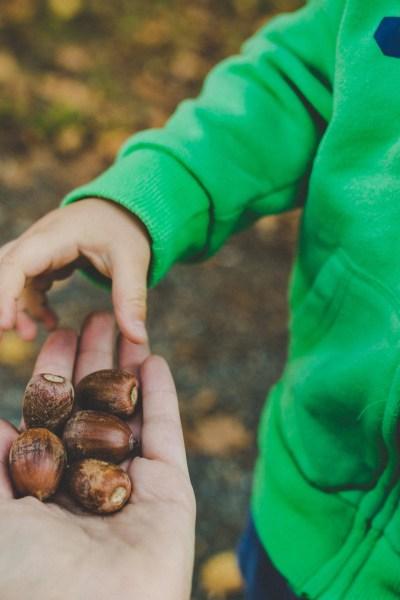 outdoor homestead forest school activities for kids toddler children