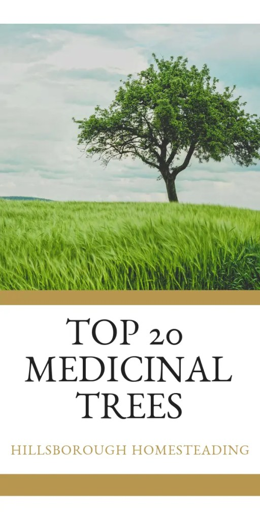 Top 20 medicinal trees and how to forage from them