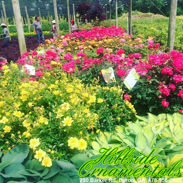 Train of flowers!
