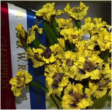 Californian Iris