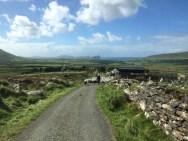 sheepblock