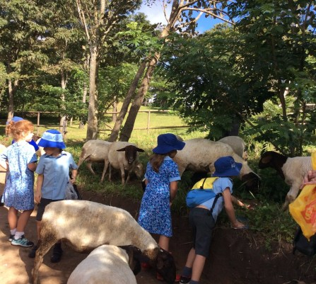 Year 1 Saunders Farm 10