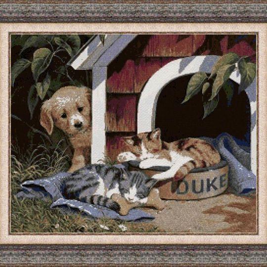 Animales 0122