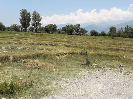 20 Kanal Land for sale in Drini Shahpur Himachal