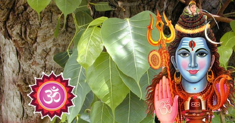 भगवान शिवको पुजा गर्दा नगर्नुहोस १५ गल्ती!