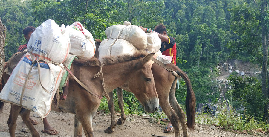 Transportation of food via livestock in remote areas of Tapaljung for decades
