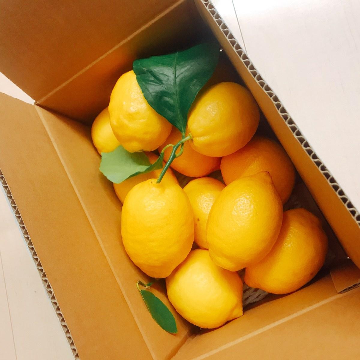 国産レモンをどっさり購入!
