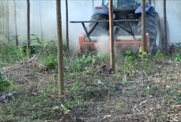 Triturador Florestal Himev Ecotritus HP240 removendo toco de parica