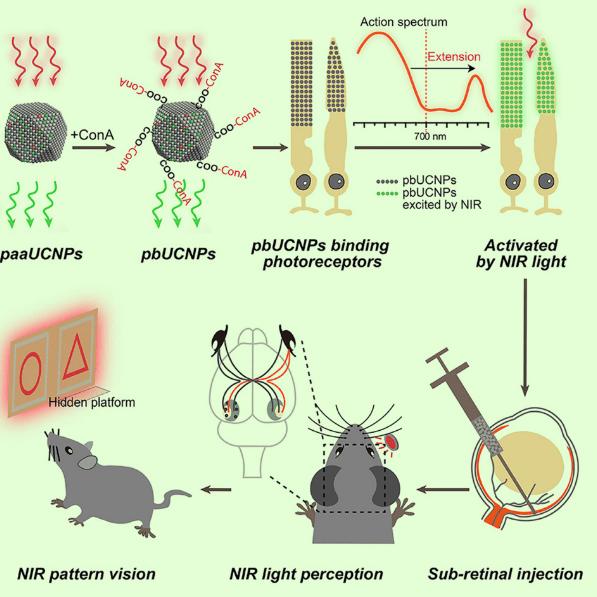 Инъецируемые связывающиеся с фоторецептором наночастицы