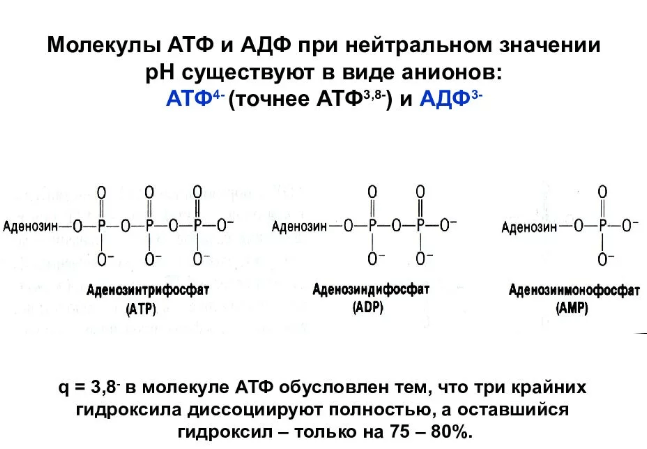 Аденозиндифосфат