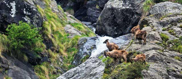 the-great-himalayan-national-park-kullu