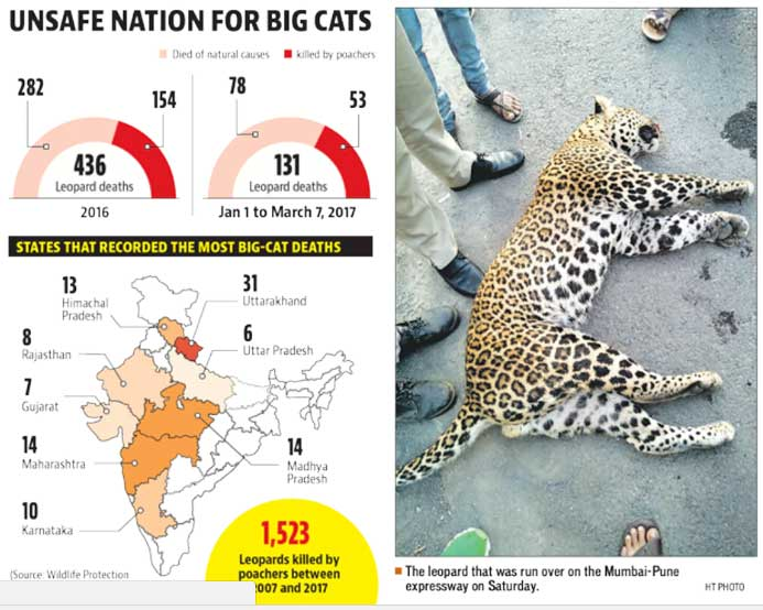 Poachers account for 53 of 131 leopard deaths across India