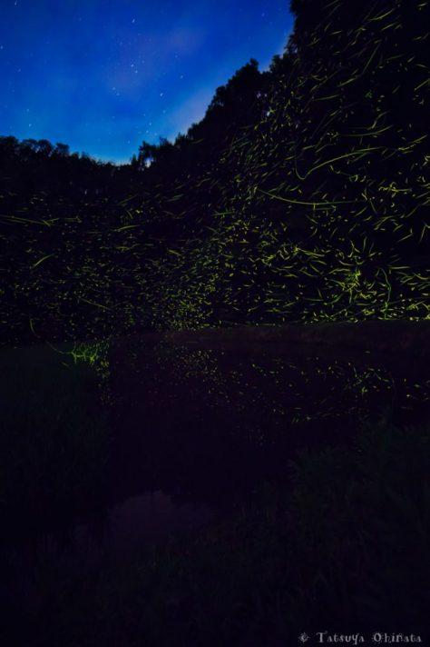 森には無数の蛍が・・・
