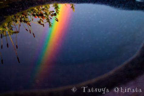 水たまりに映る虹
