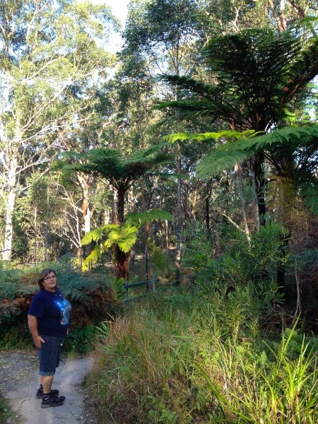 We loved the huge tree ferns on the river walk.