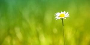 Newly growing flower in field