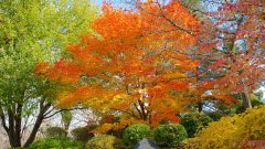 27493-Minnesota-Landscape-Arboretum