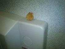 biscuit crumbs 1
