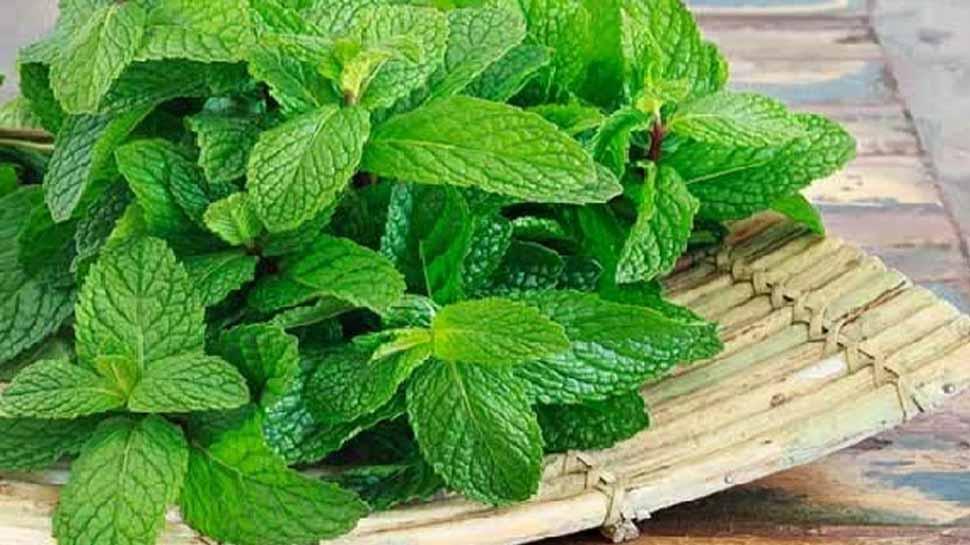 Health Tips: पुदीने की सिर्फ 2 पत्तियां सेहत के लिए हैं रामबाण, बस ऐसे करें इस्तेमाल